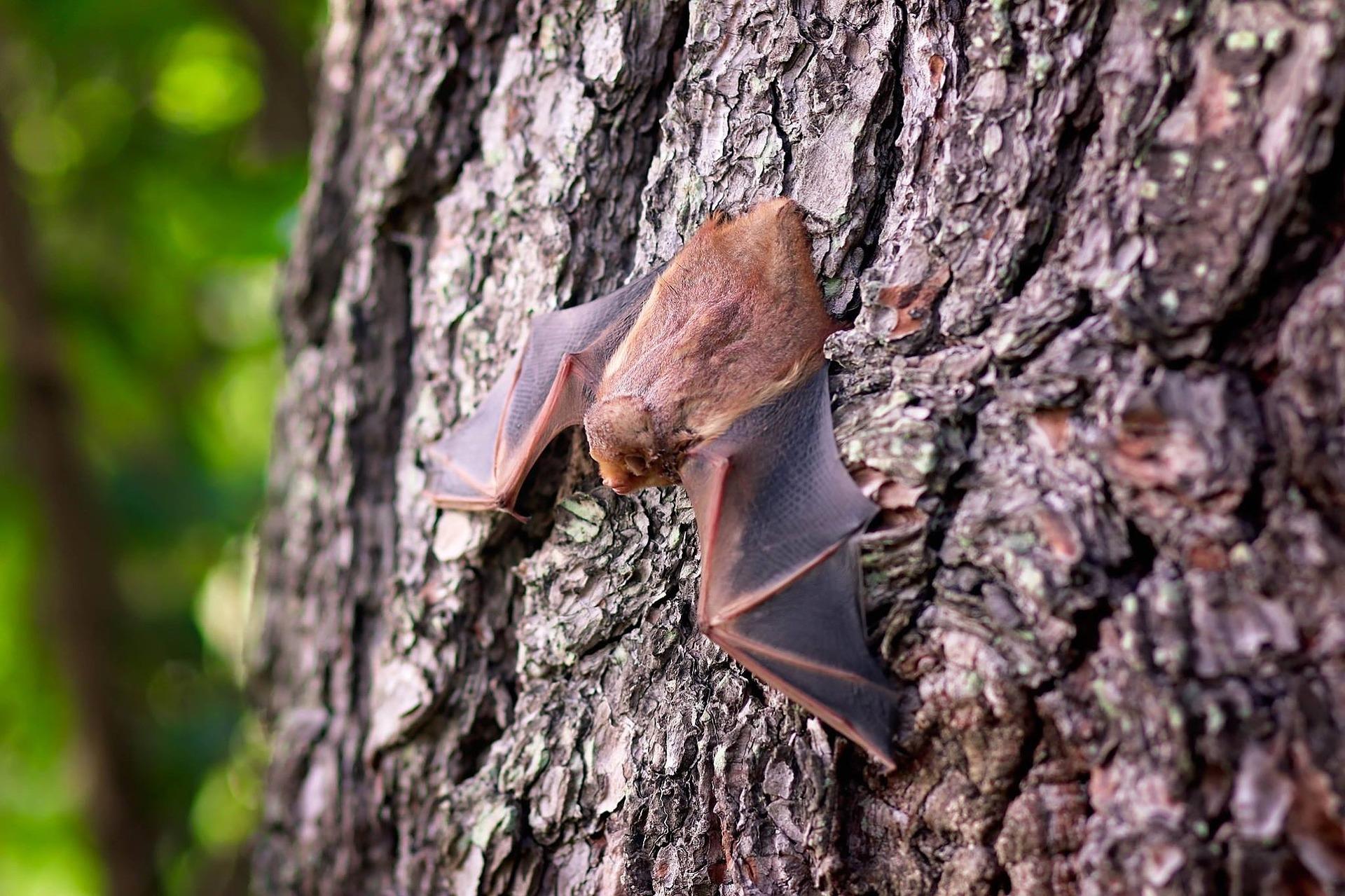 bats in gta